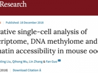Guo Fan's research team published a paper to establish a multi-omics map of mouse oocytes in the journal Cell Research